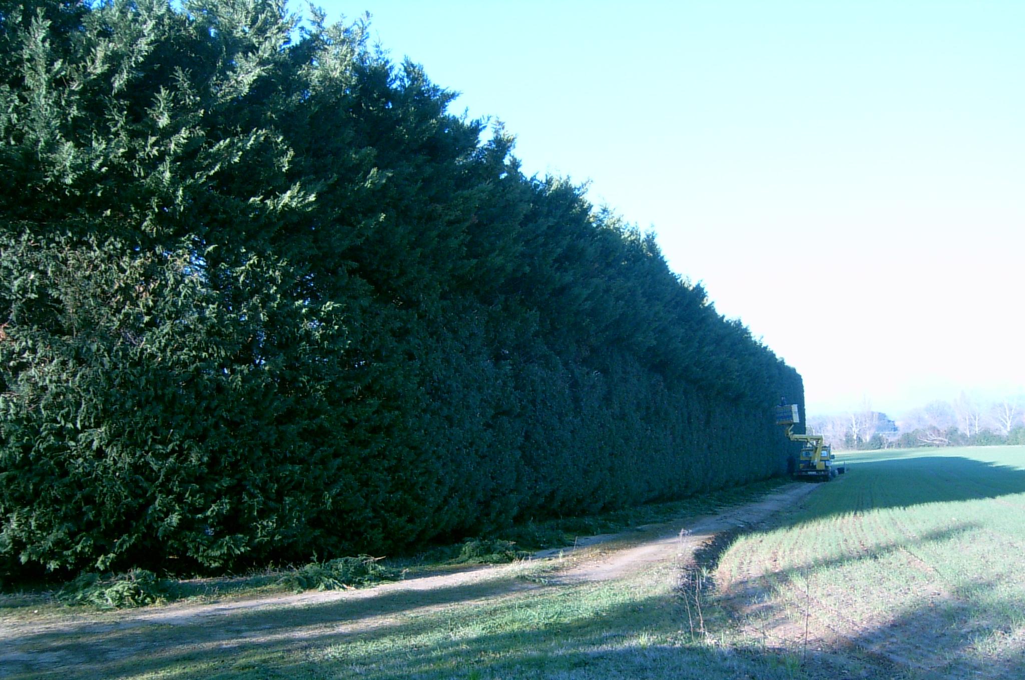 Galerie photos jardin d 39 eden - Entretien cypres de leyland ...